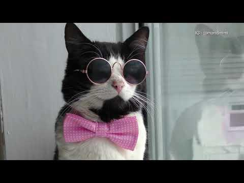 Very Stylish Cat : 4K Ultra Hd 2160p