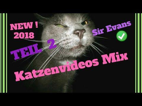 witzige Katzen Videos 2018 - new mix - by SirEvans