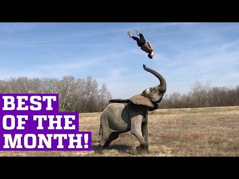 PEOPLE ARE AWESOME 2017 | BEST OF THE MONTH (March)
