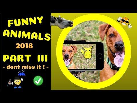 Kurze Tiervideos 3 -- funny animals part III -- ! short and funny ! -- 2018 by SirEvans